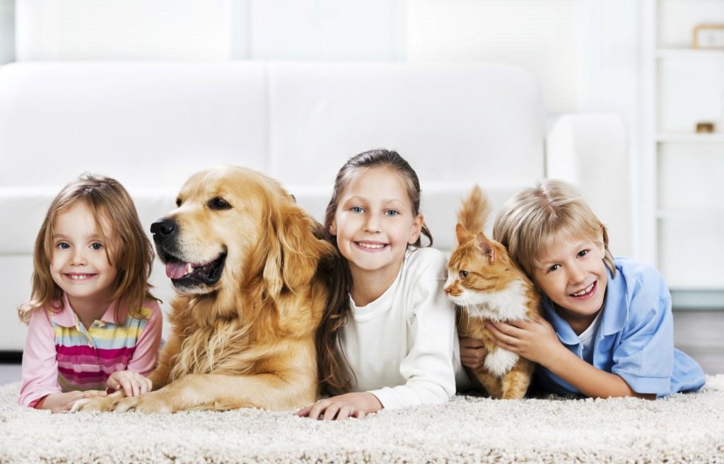 Kućni ljubimci na tepihu